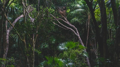 When a 'treetops' rainforest home is sold for $5.5 million in Texas